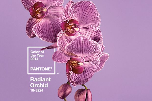 Pantone's Color Of The Year 2014 - Radiant Orchid