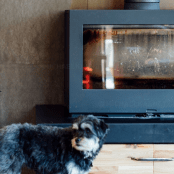 A dog standing in front of a fireplace